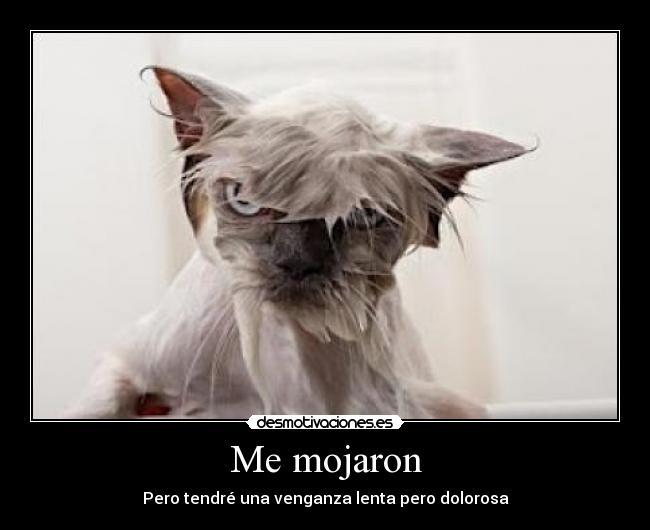 carteles gatos mojados desmotivaciones