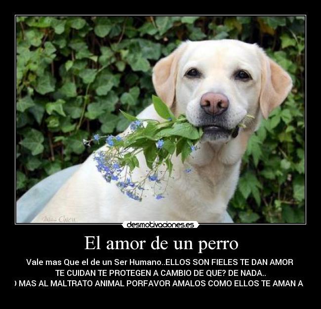 No A Las Peleas De Perros Amr Animal Frases Para El Alma Y