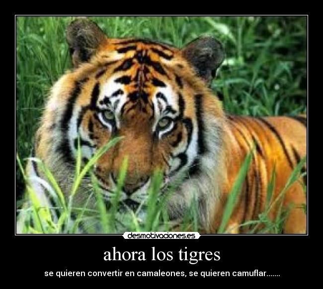 Frases De Los Tigres Imagui