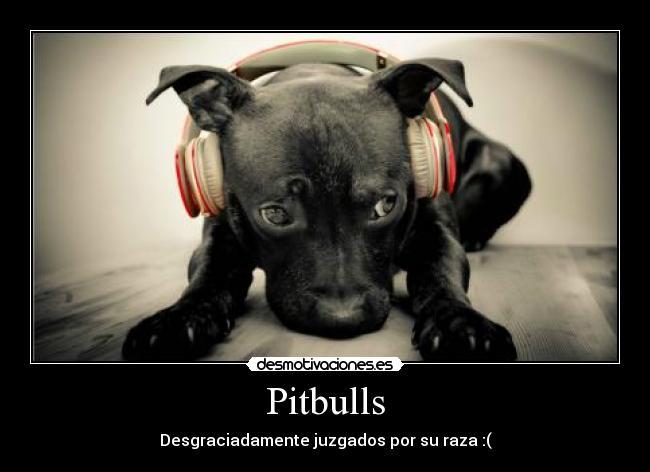 Preciosas Imágenes de Perros Pitbull Cachorros | Banco de