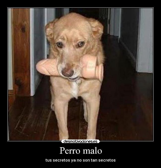 carteles perro malo pene secretos desmotivaciones