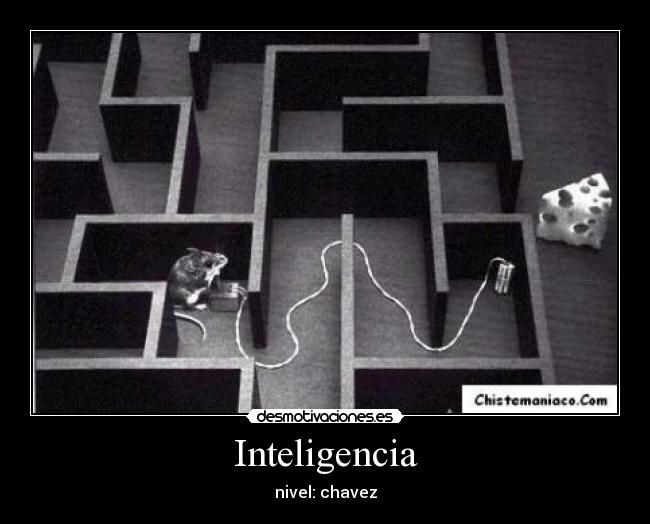 Inteligencia - nivel: chavez