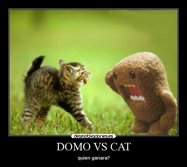 domo vs cat desmotivaciones