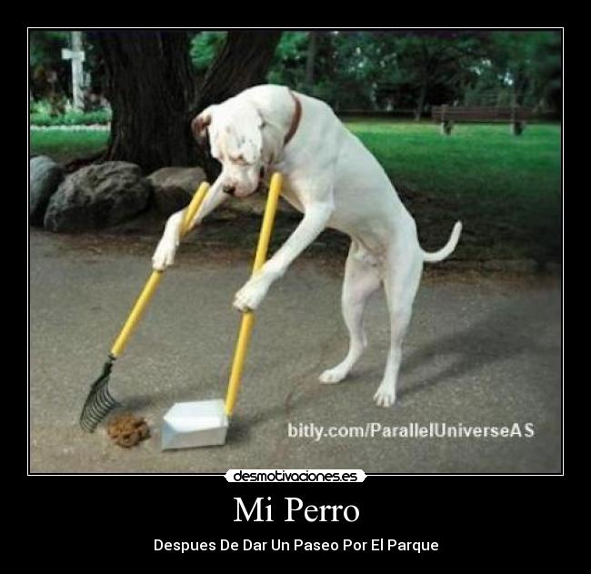 Mi Perro - Despues De Dar Un Paseo Por El Parque