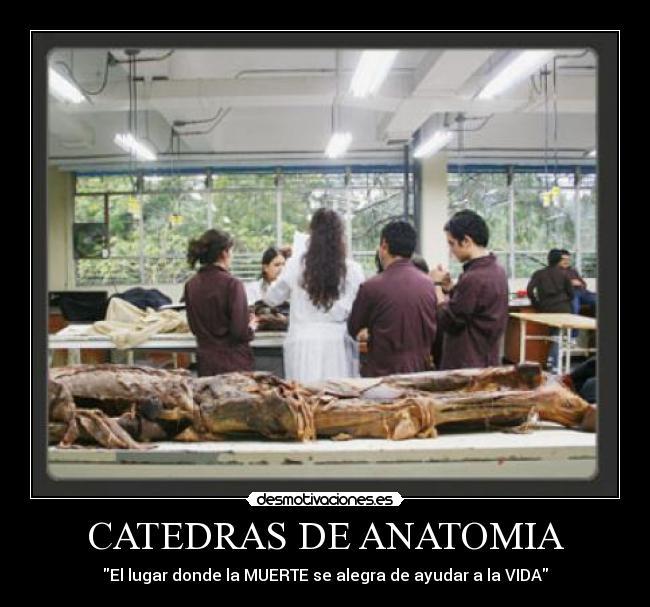 Fantástico Citas Divertidas Anatomía Regalo - Anatomía de Las ...