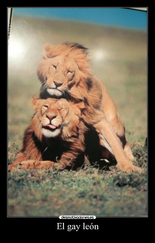 gay en leon