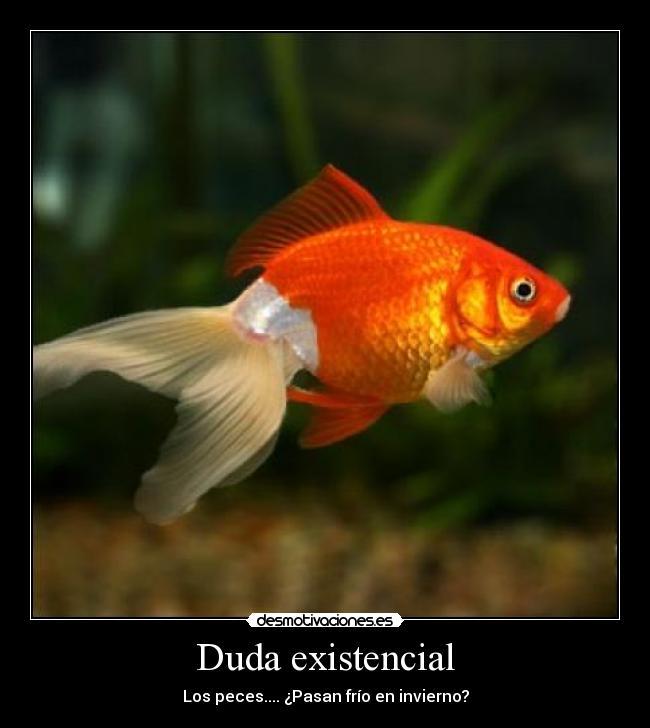 Duda existencial desmotivaciones for Mejores peces agua fria