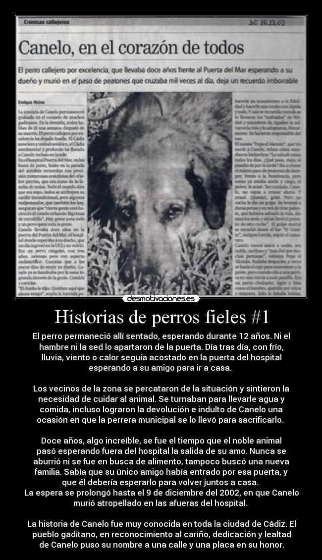 Humanos... los peores animales!