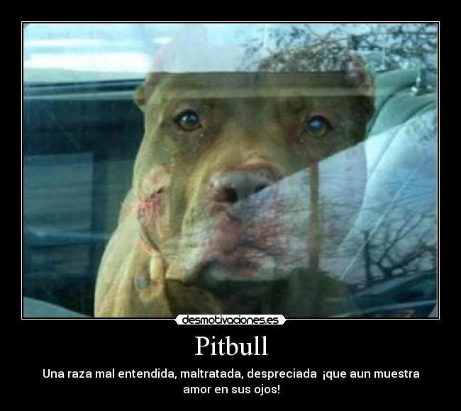 Carteles de Pitbull Pag. 83 | Desmotivaciones