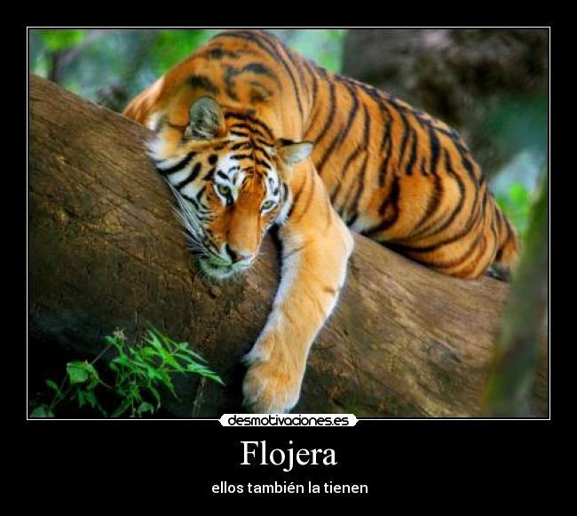 Imagenes Graciosas Con Frases De Flojera | Fotos para