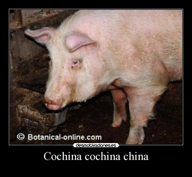 Cochina Cochina China Desmotivaciones ❙ «reconcomido seguramente por la cochina envidia. desmotivaciones es
