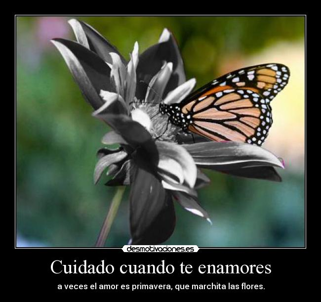 Cuidado cuando te enamores - a veces el amor es primavera, que marchita las flores.