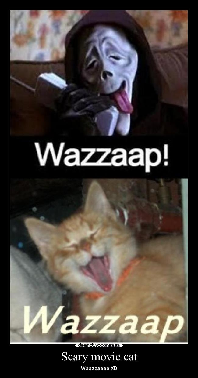 Scary movie cat -