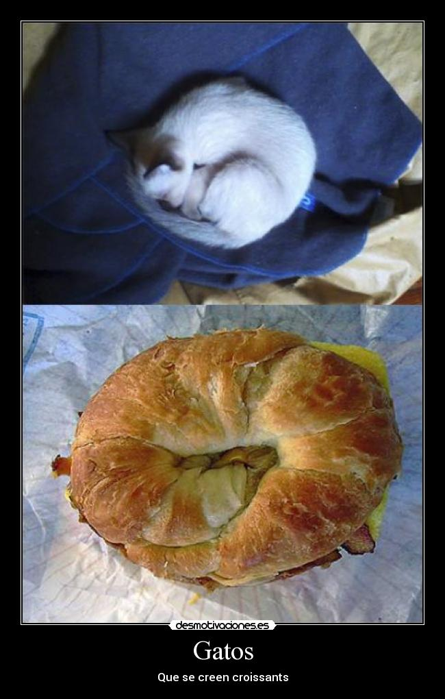 Gatos - Que se creen croissants