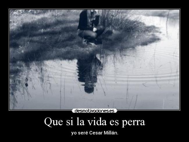 Que si la vida es perra - yo seré Cesar Millán.