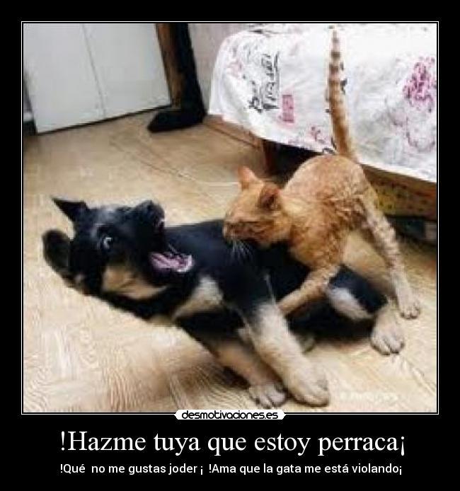 carteles gatas locas que violan perros guapos desmotivaciones