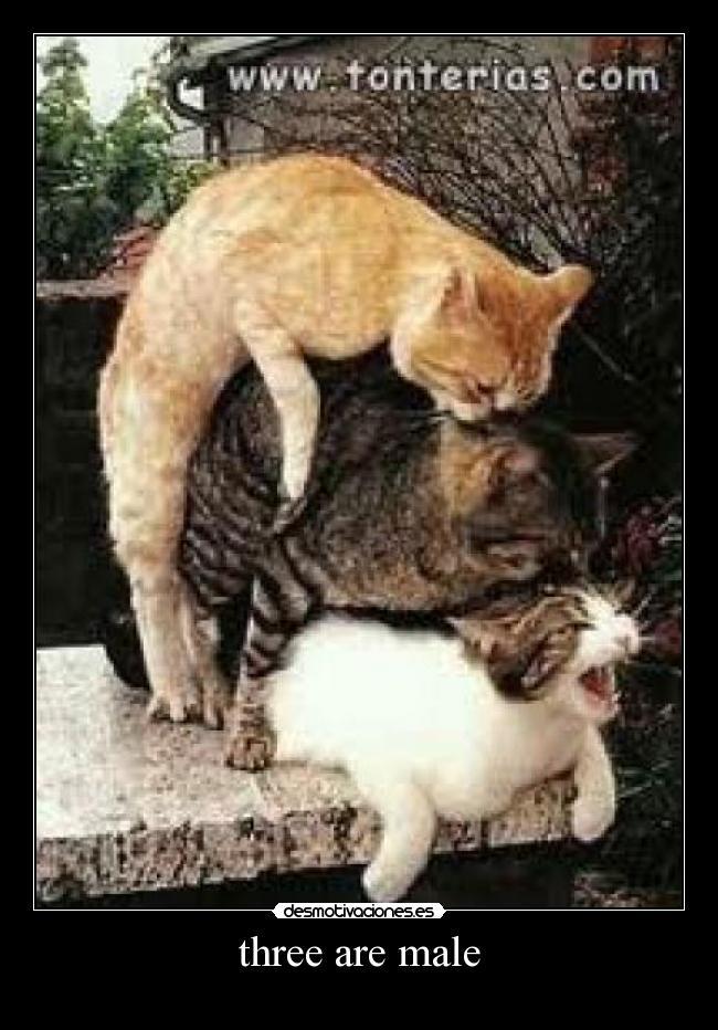 Vids de sexo de gato grande