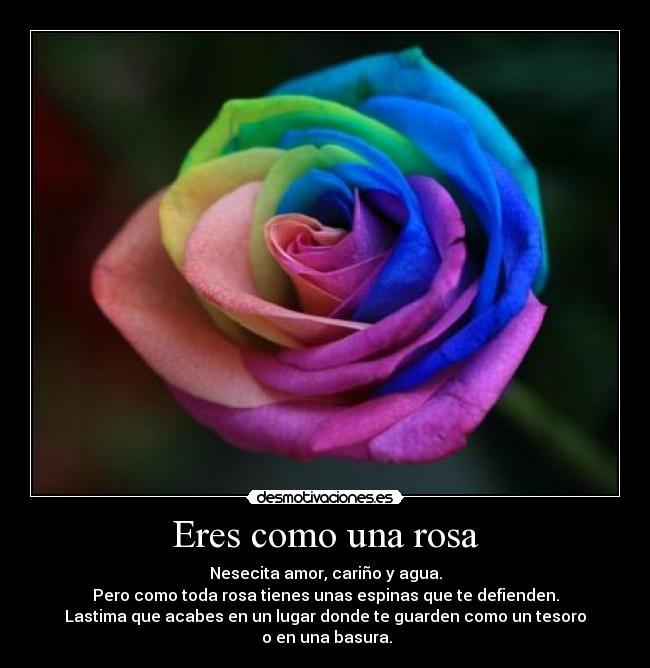 Eres como una rosa desmotivaciones - Como secar una rosa ...