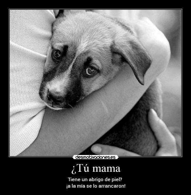 Reflexionemos perros taringa - Cuando se puede banar a un perro ...