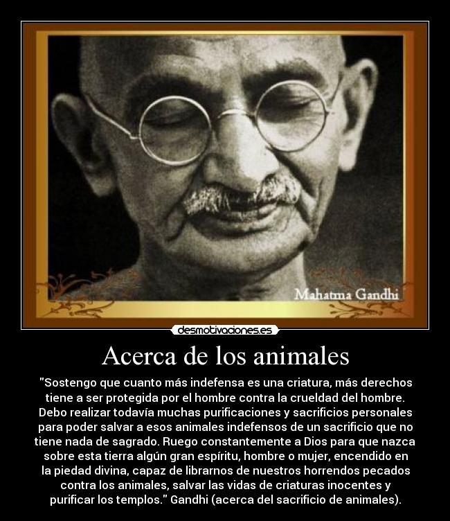Acerca De Los Animales Desmotivaciones