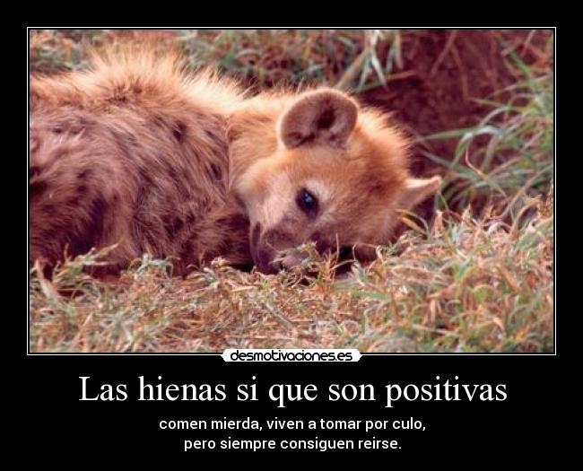 carteles hienas reirse positivas desmotivaciones