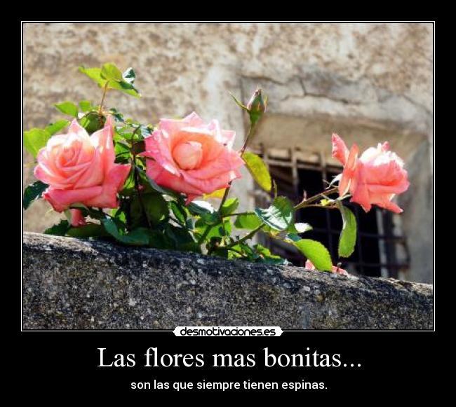 Las flores mas bonitas desmotivaciones for Las plantas mas bonitas