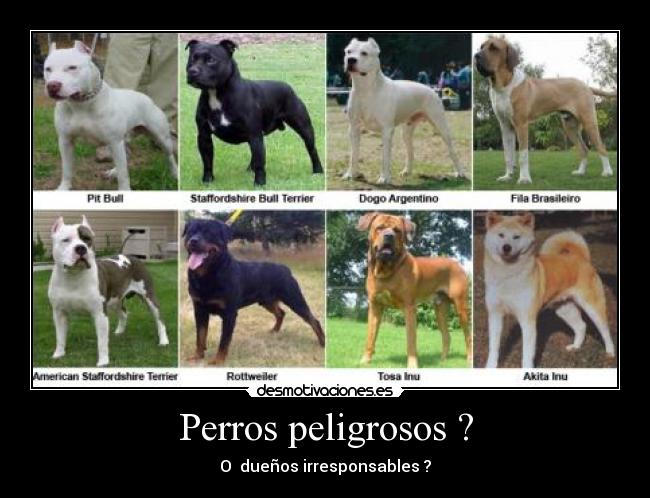 Los 10 Perros Mas Peligrosos