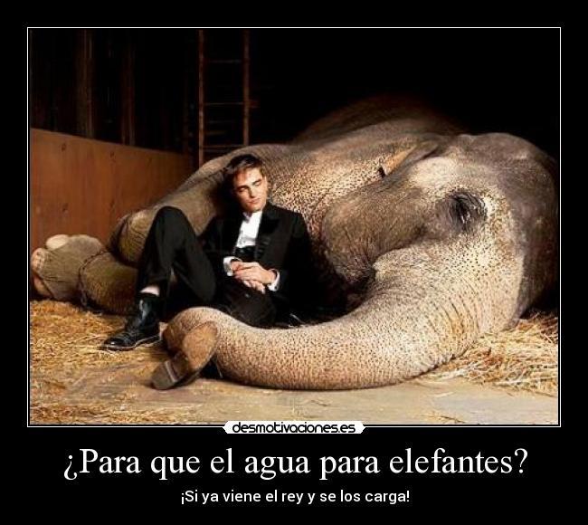 Para Que El Agua Elefantes