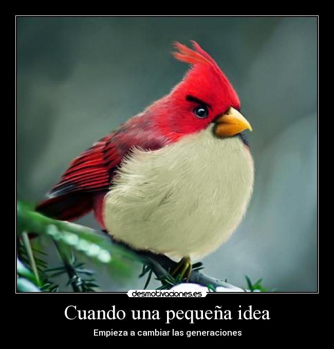 carteles angry bird everywhere anonimo13 desmotivaciones