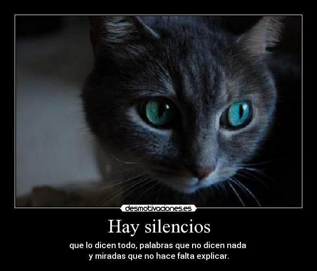 Gato Sonriente Tumblr Frases Imagui