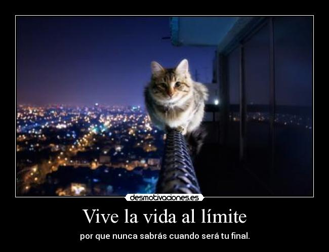 carteles vida cat limit desmotivaciones