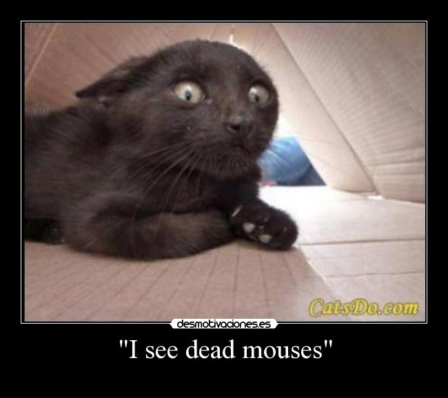I see dead mouses -