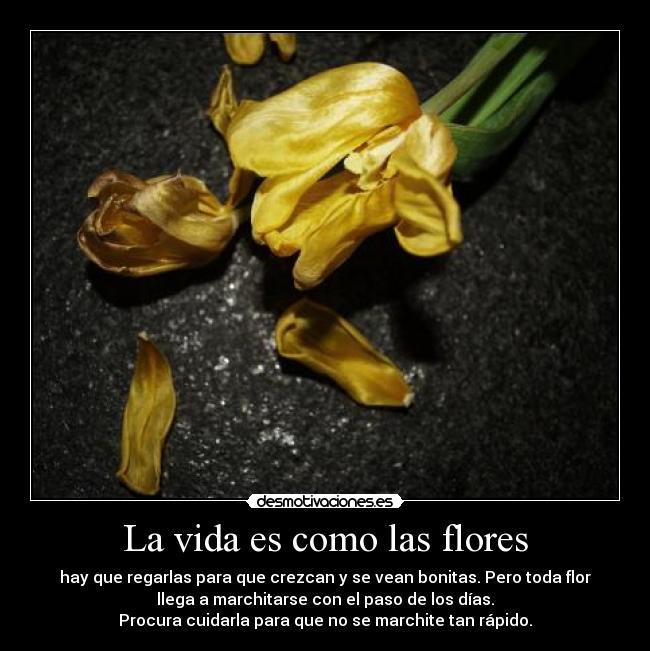 La Vida Es Como Las Flores Desmotivaciones
