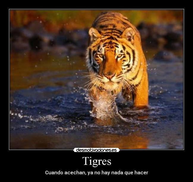 Tigres Desmotivaciones