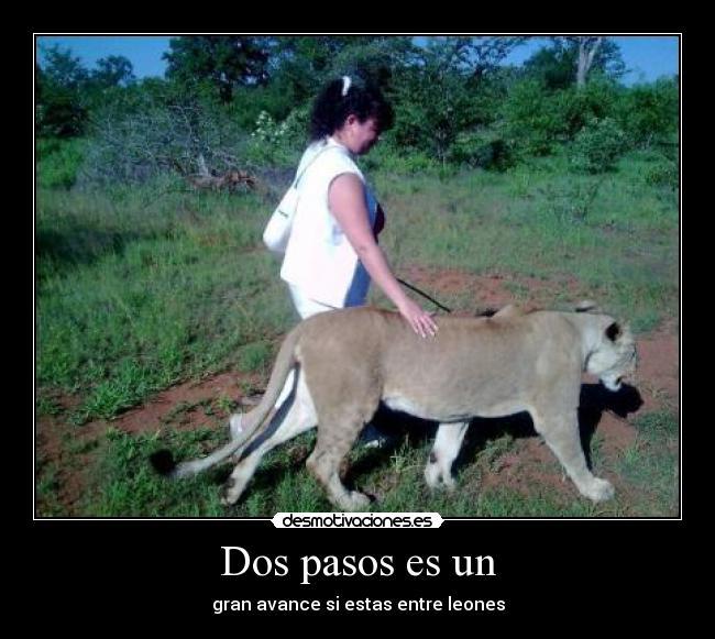 AQUI ESTOY....ENTRE DOS LEONES!!! Caminandoconleones
