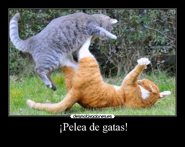 Me gustaria entrar en el subforo secreto - Página 5 Catsfighting