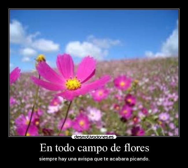 carteles campo flores avispa picar desmotivaciones