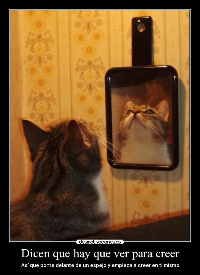 Dicen que hay que ver para creer Ver espejo publico de hoy