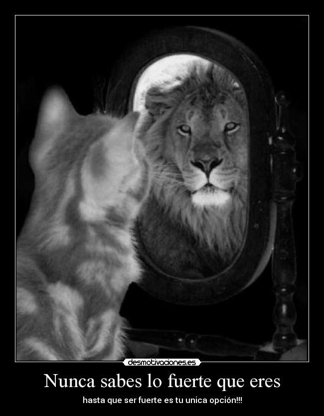 Nunca sabes lo fuerte que eres | Desmotivaciones