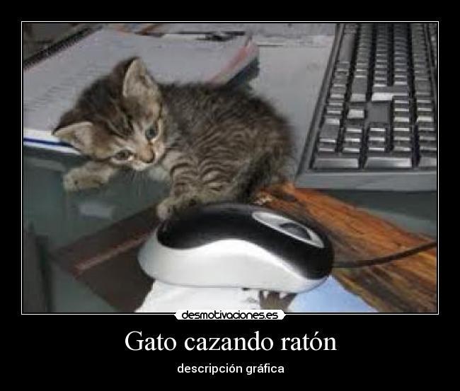 Gato cazando rat n desmotivaciones - Como cazar ratones ...