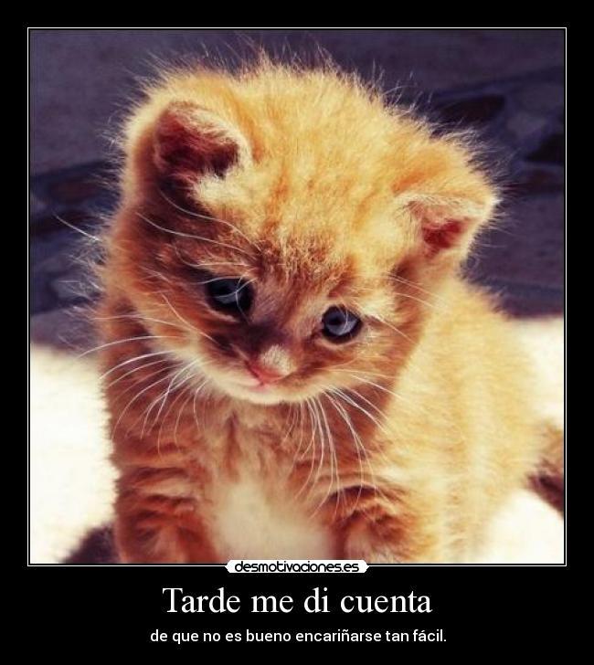 Беременной приснился рыжий котенок