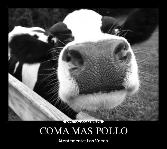 Monstruosas vacas transgénicas ya son una realidad Vaca_7