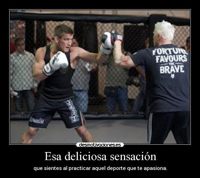 carteles niko69 kickboxing desmotivaciones