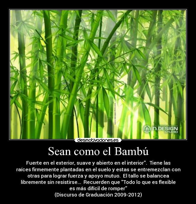 Sean como el bamb desmotivaciones - Como se planta el bambu ...