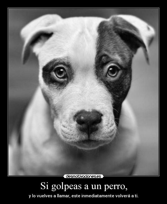 Si Golpeas A Un Perro Desmotivaciones