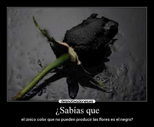 carteles sabias que unico color que pueden producir las flores negro desmotivaciones