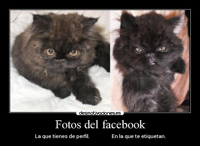 carteles facebook gato intruders crazyclub clanreyleon fotos facebook desmotivaciones