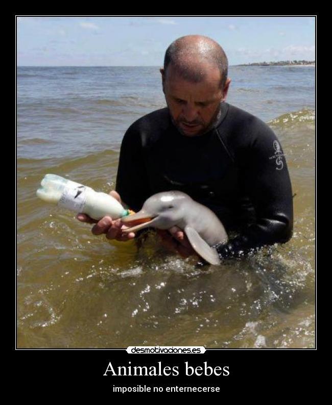Animales bebes | Desmotivaciones