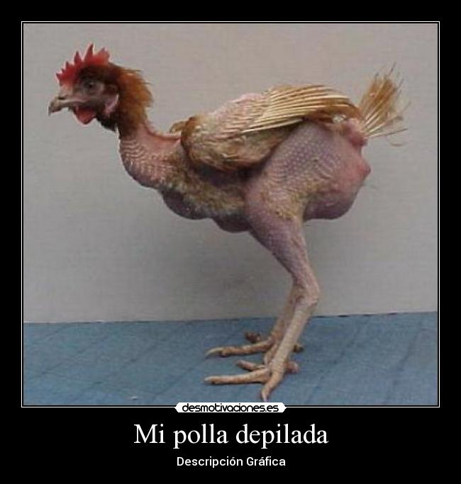 una foto de mi polla hermosa - Imgenes - Taringa!