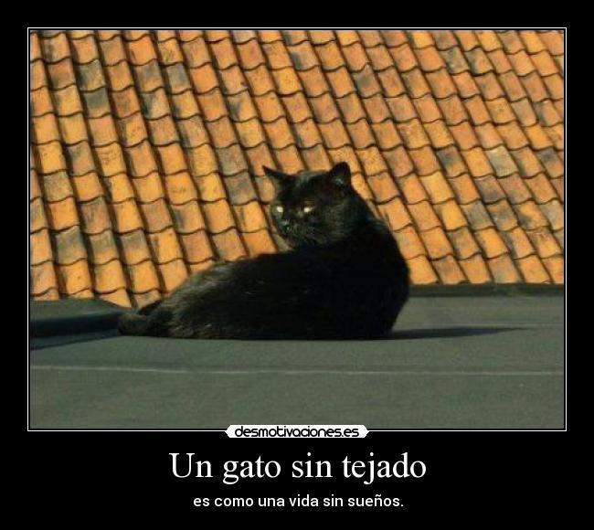 Un gato sin tejado desmotivaciones - Dibujos de tejados ...